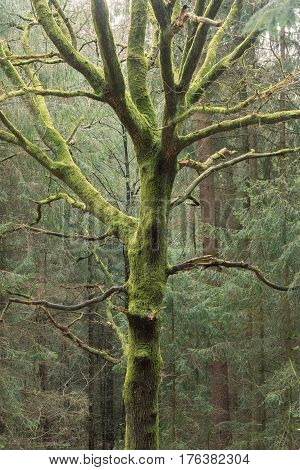 Photo Of A Single Tree Covered With Moss In The Forest