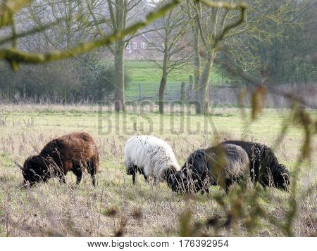 Some sheep graze peacefully in a distant field.
