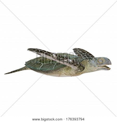 Green Sea Turtle isolated on white background. 3D illustration