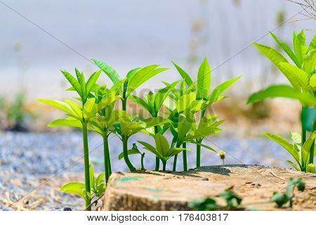 Small Plant Growth Strong In Natural Stone Ground.