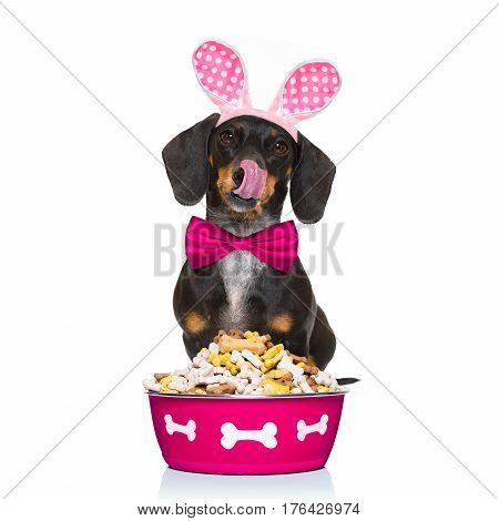 Hungry Sausage Dachshund Dog