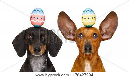 Easter Bunny Dogs With Egg