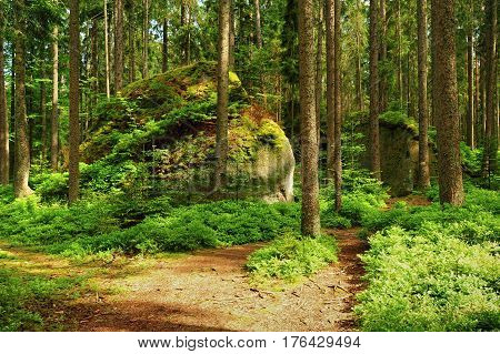 Summer forest road and moss - covered rock