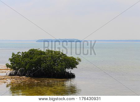 Very small islet consisting of a mangrove in the Florida Keys with other islands in the back.