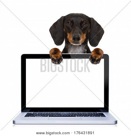 Pc Computer Dog