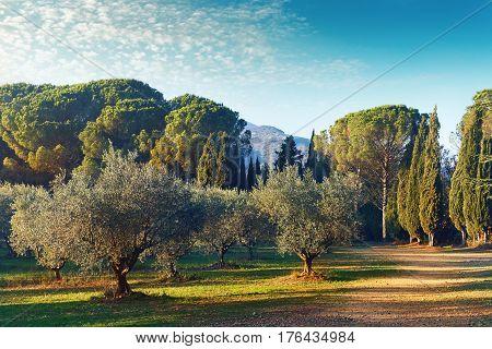 Picturesque park of Lourmarin. Provence-Alpes-Cote d'Azur. France