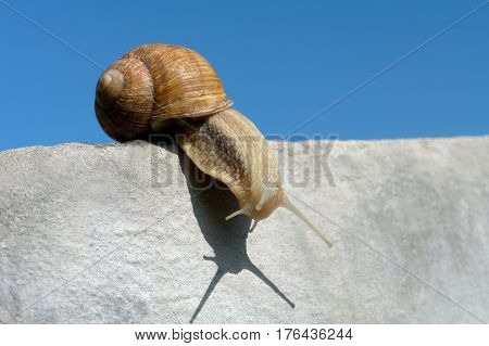 Snail creeps on a concrete wall on a blue background