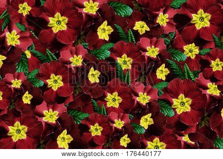 Flowers background. Flowers red violets. Much violets with a yellow center. floral collage. flowers composition. Nature. 3D illustration.