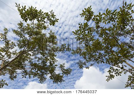 Summer foliage against on beauty sky backgrounds