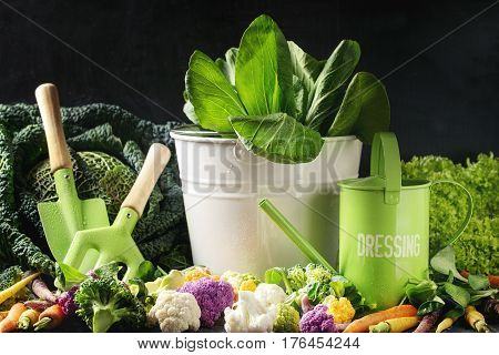 Variety of raw green vegetables salads, lettuce, bok choy, corn, broccoli, savoy cabbage, colorful young carrots and cauliflower, kitchen gardening utensil over black stone texture background.