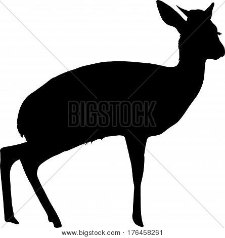 Silhouette of a standing damara dik dik - digitally hand drawn vector illustration