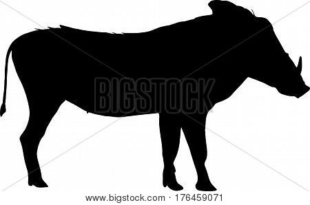 - digitally hand drawn vector Silhouette of a warthog, standing, side view illustration