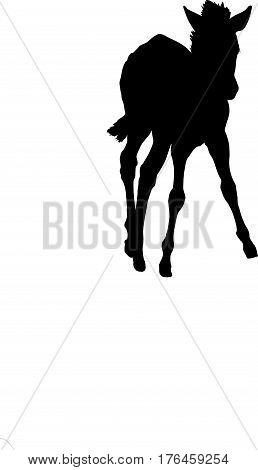 Silhouette of a hartmann mountain zebra - digitally hand drawn vector illustration