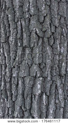 Texture of a tree and a board. relief and close-up