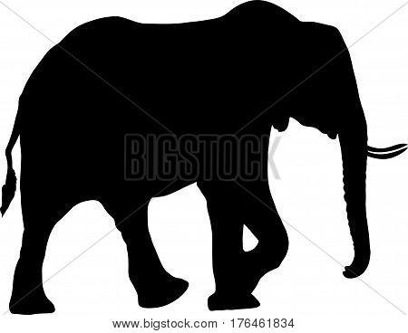 Silhouette of a desert elephant - digitally hand drawn vector illustration