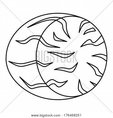 Nutmeg icon. Outline illustration of nutmeg vector icon for web