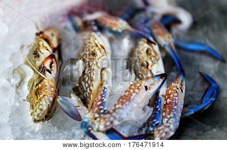 Photo of delicious crabs in the ice on the counter