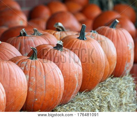 Pumpkins Lined Up For Sale on Hay Bales