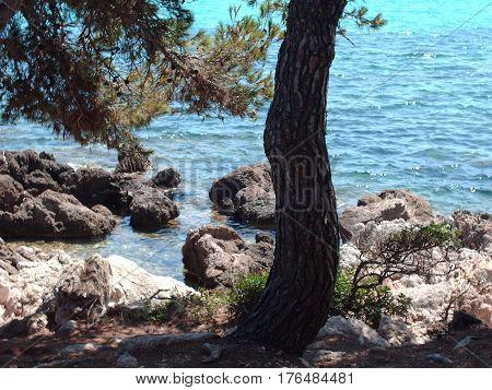 El arbol mirando al mar en bello dia soleado