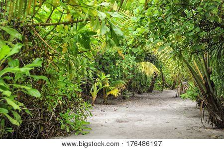 Palm leaves. Tropical Forest on the island in indian ocean. Beautiful landscape of humid tropical jungle. Picture of a tropical forest background