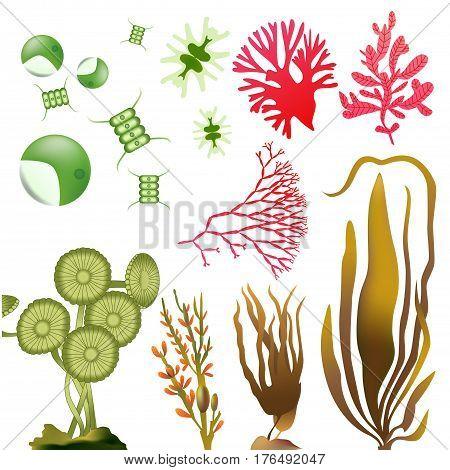 underwater Algae plankton seaweed elements vector set