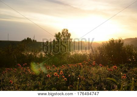 thick morning fog in the summer forest. thick morning fog in the forest at pond. Morning landscape in summer thick fog.dense fog in the morning. early morning. forest hiding in the fog.orange flowers