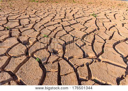 Pattern of arid soil in summer season