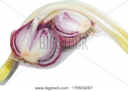 Germinated onion isolated on a white background