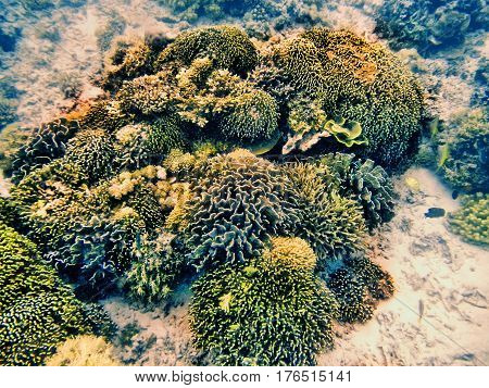 Coral Reef In Komodo National Park, Flores Sea, Nusa Tenggara, Indonesia.
