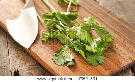 Leaves of coriander on a wooden board in a kitchen