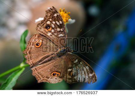 A butterfly feeding on flower in sunshine