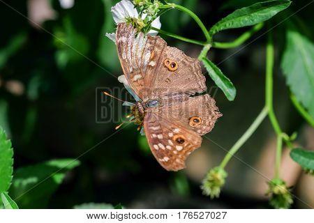 A butterfly feeding on chrysanthemum flower in sunshine