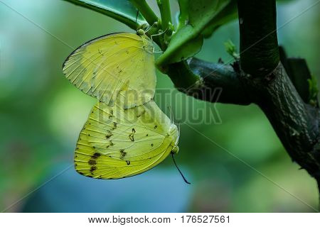 butterfly feeding on flower in a summer garden