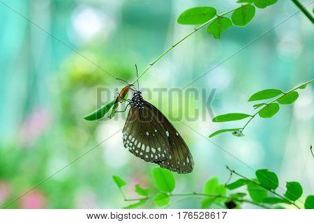 Butterfly feeding on green leaf in a summer garden