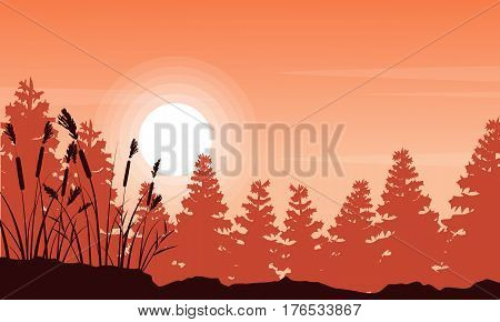 Silhouette of coarse grass and spruce forest landscape vector