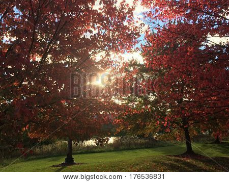 Early morning sun in fall starting to cast beautiful color on leaves that just changed color