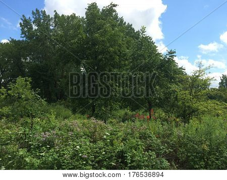 Summer with cloud front over trees and wildflower patch in Prairie setting