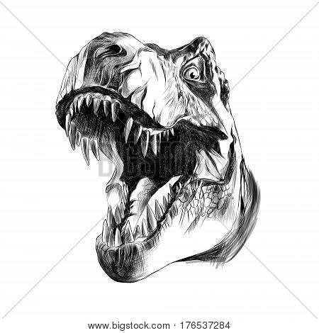 dinosaur head sketch vector illustration graphic isolated
