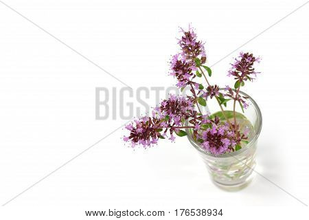 Thyme flower isolated on the white background in glass with water.