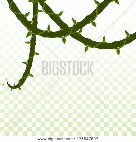 isolated dangling creepers. on a transparent background. vector illustration