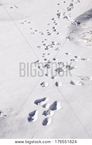Animal trails in snow. winter on mountain