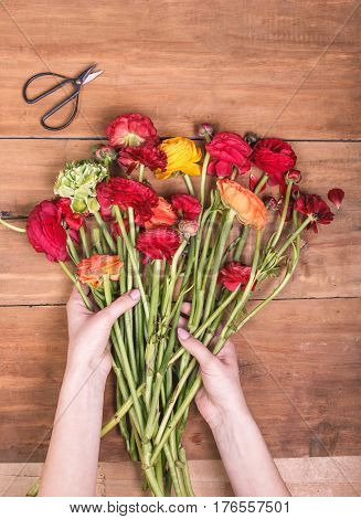 Ranunkulyus bouquet with female hands on a wooden background. Concept of florist tools