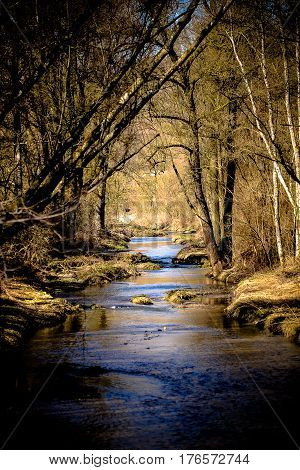 Stream crosses through the forest in springtime