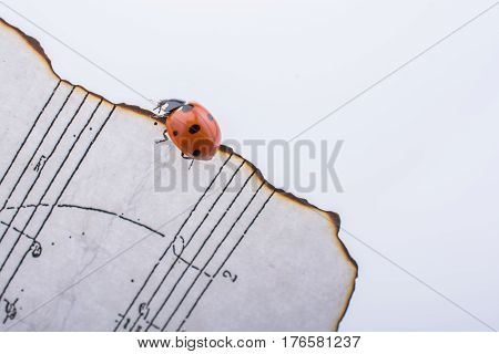Beautiful Red Ladybug Walking On Burnt Paper