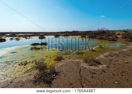 Contaminated lake .Abandoned small lake. Environmental pollution