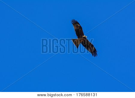 A Golden Eagle With A Blue Summer Sky