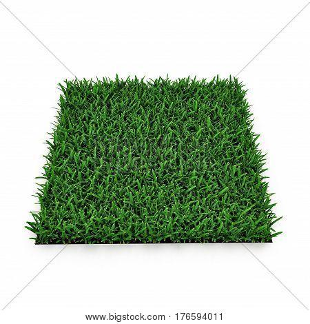 Saint Augustine Warm Season Grass on white background. 3D illustration
