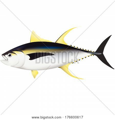 marine fish ocean tropical illustrator aquatic coral