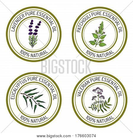 Set of essential oil labels lavender, patcouli, eucalyptus, valerian. Vector illustration