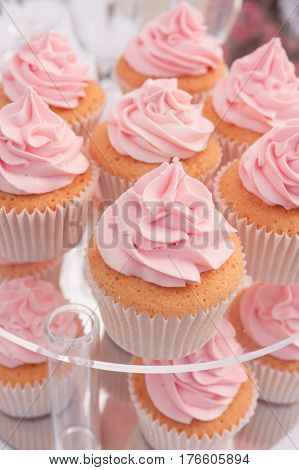 Cupcake tray vanilla cupcakes with pink cream close up